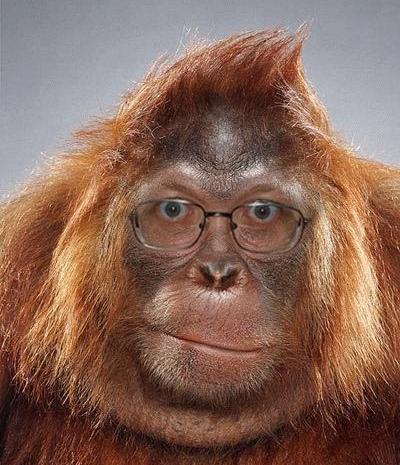 scimmia con occhiali