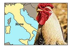 Italiani polli