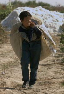 bambino che raccoglie cotone