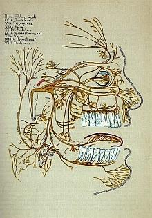 Disegno di Ernest Adler