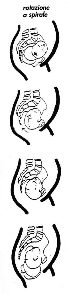 rotazione a spirale del bambino-durante il parto